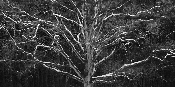 A tree in winter in Nijmegen, The Netherlands, by Dermot Greene
